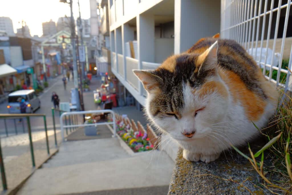 c3a422614e30a Si vous aimez les chats, allez faire un tour à Yanaka   Pen Magazine ...