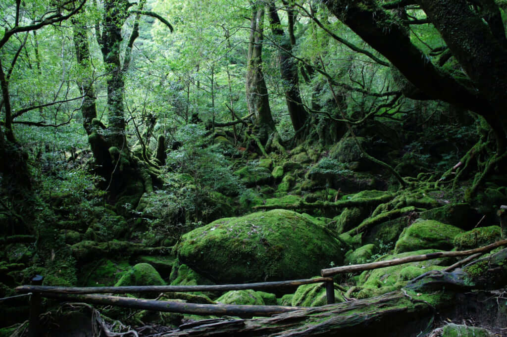 Shiratani Unsuikyo The Forest That Inspired Princess Mononoke Pen Magazine International